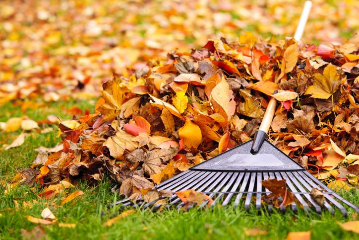 Decorative Rake & Pile Of Leaves